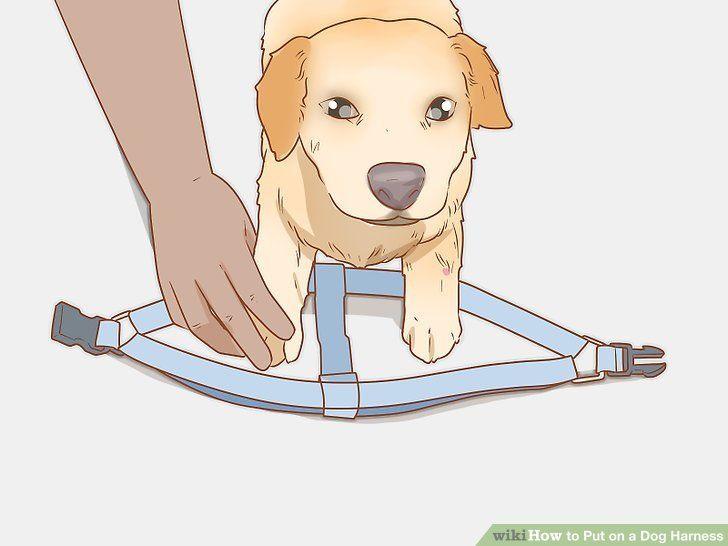 Wie Man Einen Hundegeschirr Anlegt Hunde Hundepfoten
