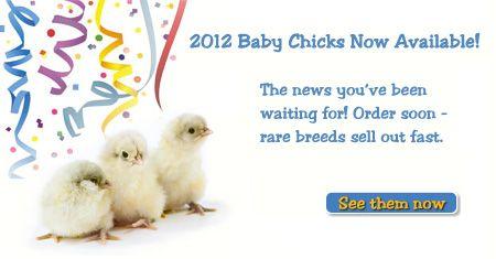 good website mypetchicken.com: Backyard Chickens, Backyards Chicken, Chicken Breeds, Pets Chicken, Chicken Coops, Chicken Care, Baby Chicks, Raised Chicken, Pet Chickens