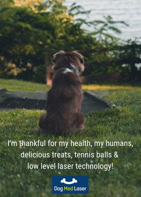 Home Dog Training Tips Dog Training Meds For Dogs