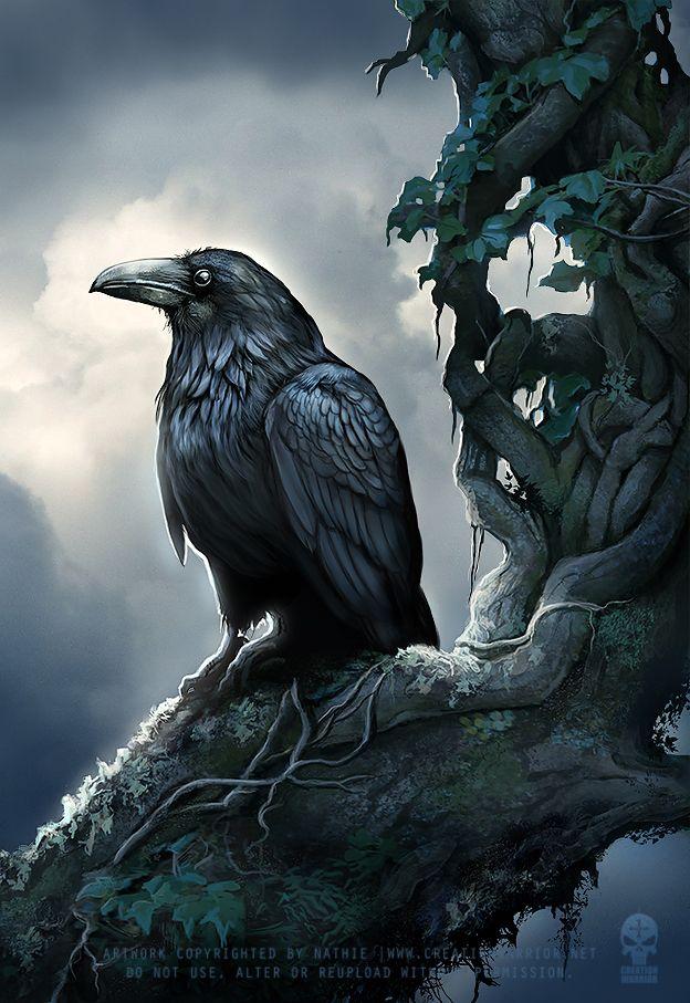 Corvus der zahme Rabe ist das Maskottchen des Königreichs Ravencrest. Er ist ein majestetischer Vogel mit schwarz-bläulich schimmernden Gefieder - bei richtigem Licht ist manchmal sogar ein wenig violetter Schein zu erkennen. Seine Augen sind weise und er strahlt viel Eleganz aus.
