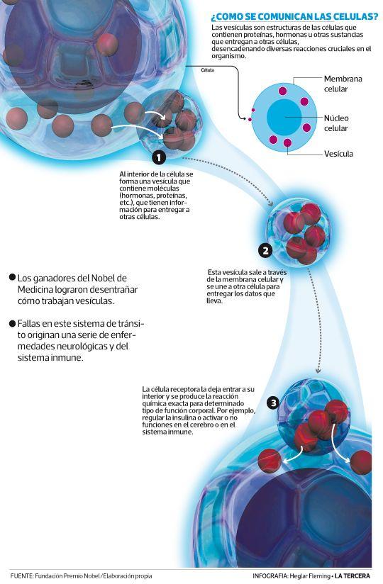 """Los físicos belga François Englert y británico Peter Higgs, que hoy ganaron el Nobel de Física 2013, postularon la existencia del """"bosón de Higgs"""". Este descubrimiento contribuye a nuestro entendimiento del origen de las partículas subatómica con masa."""