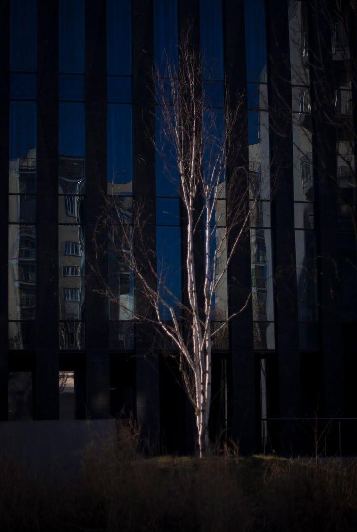 a Bit in Mee: Enjoy the Silence Powiśle Park #Warszawa #tree