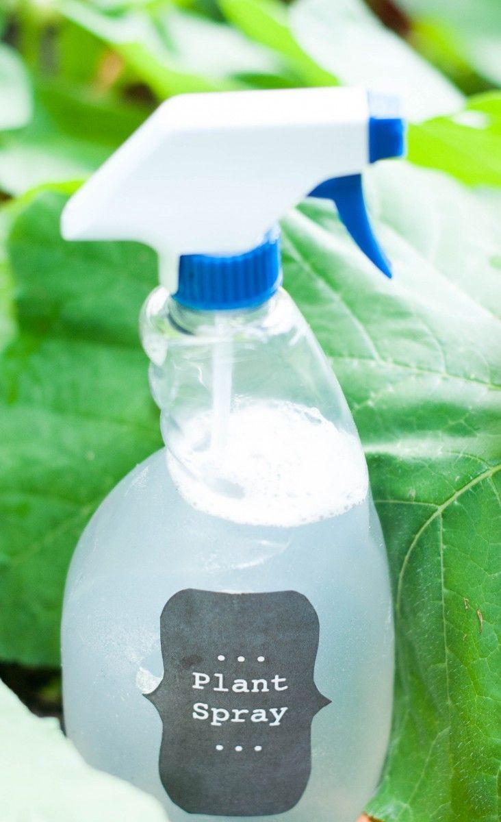 Diy insecticidal plant spray homemade bug spray garden