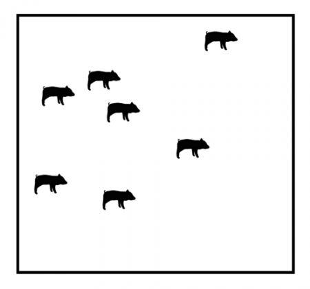 Prasátka ve výběhu: Na obrázku vidíte několik prasátek v ohradě. Dokážete pomocí tří rovných čar rozdělit prasátka tak, aby bylo každé prasátko v samostatné ohrádce?