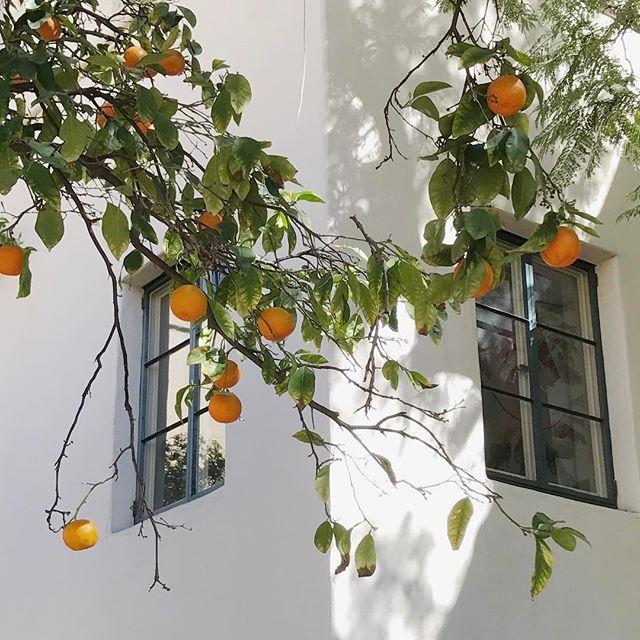 Ideas Plants Photography Art Inspiration For 2019 What A Nice Day, Photowall Ideas, Italian Summer, European Summer, Summer Aesthetic, Orange Aesthetic, Aesthetic Girl, Belle Photo, Aesthetic Pictures