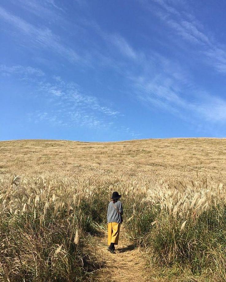 제주도 새별오름 Saebyul oreum, Jeju island Photo by @naraemong  #jeju #jejuisland #jejudo #jeju_korea #korea #southkorea #landscape #view #제주 #제주도 #오름 #새별오름 #가을