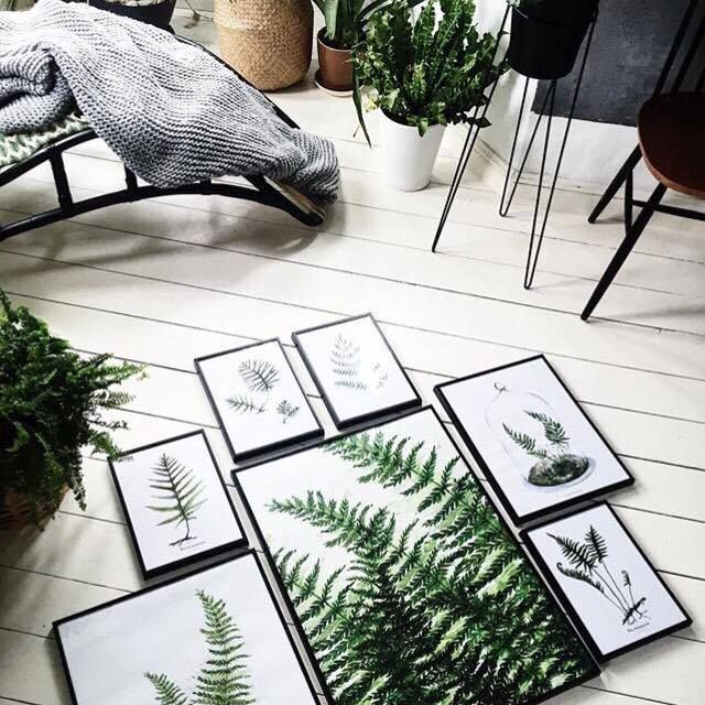 set ferns prints