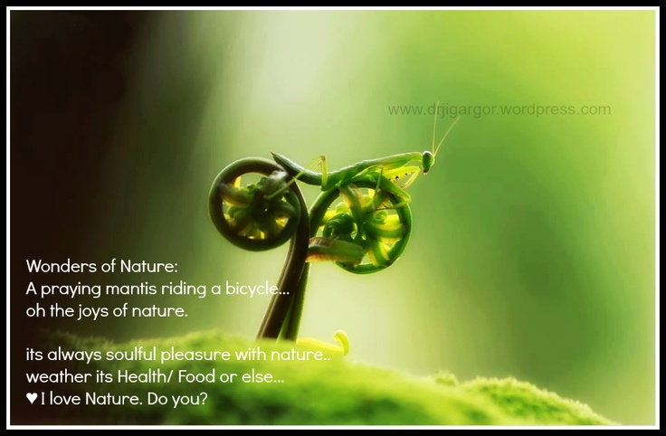 Wonders of Nature:   A praying mantis riding a bicycle...  oh the joys of nature.     its always soulful pleasure with nature..  weather its Health/ Food or else...  ♥ I love Nature. Do you?