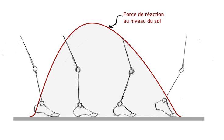 [Article] Relation entre la pose du pied en course à pied et la fréquence des blessures