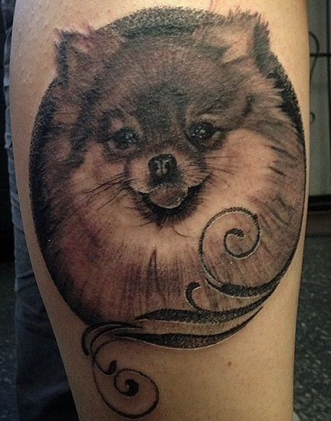 The 10 Coolest Pomeranian Tattoo Designs In The World