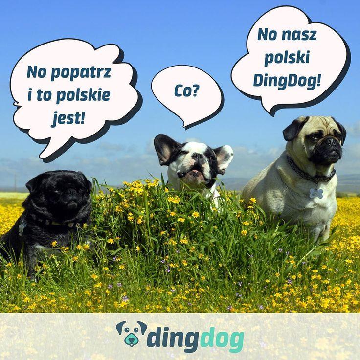 Pamiętacie o tym, że nasza aplikacja powstała w Polsce z miłości do zwierząt? #DingDog #madeinpoland