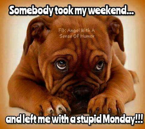 Somebody took my weekend... And left me with stupid Monday