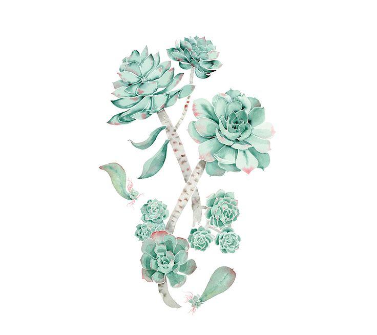 Aimée van Drimmelen #succulent #illustration