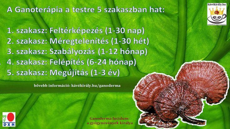 """A pecsétviaszgombával való kezelés (más néven: Ganoterápia) segítségével helyreállítható a testben felborult egyensúly. Folyamatos szedésének következtében a test megújul, felépül, megfiatalodik. Ezért a Ganoderma gombát a ,,Halhatatlanság Gombája""""-ként is ismerik Keleten. http://kavekiraly.hu/ganoderma"""