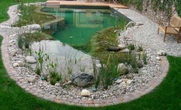 Natural Swimming Ponds By Rin Robyn Pools Original Pool Outline Used Along With A New