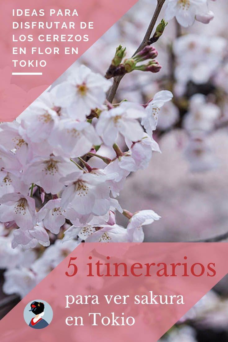 Los Mejores Lugares Para Ver Cerezos En Flor En Tokio Japonismo Tokio Torre De Tokio Sakura