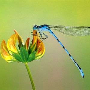Interesting dragonfly facts for kids and adults. Information on ...