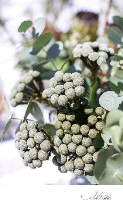 Wedding  Flowers diy brunia albiflora fynbos