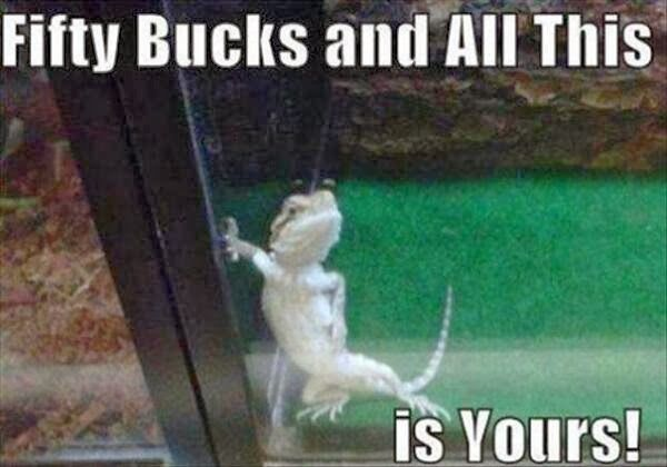 003-funny-captions-017-lizard-fifty-bucks-and-all-this-is-yours.jpg 600×420 pixels