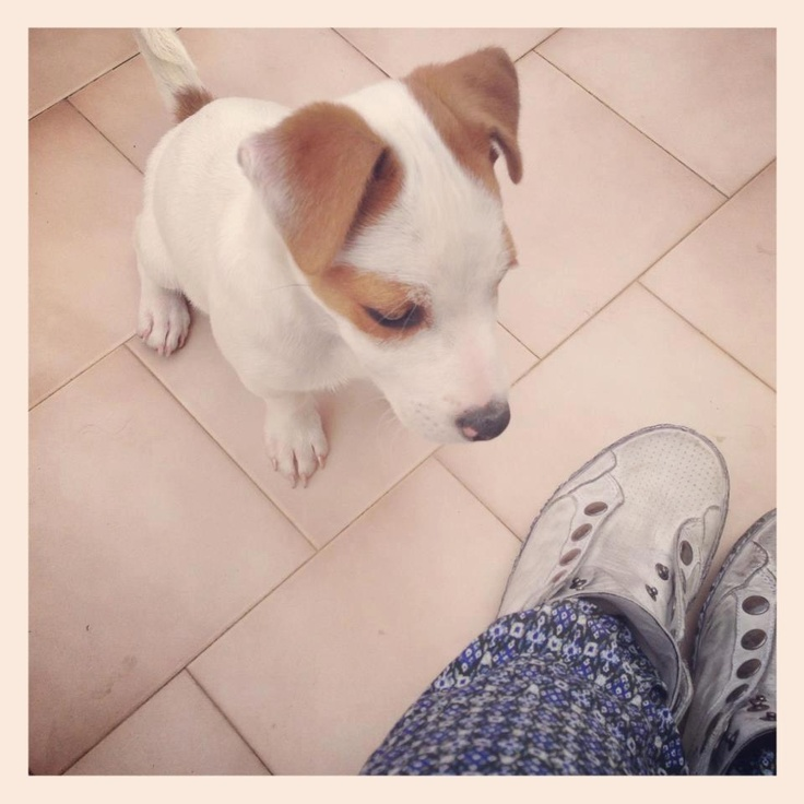 Our No Place sneakers and fashion blogger's doggy! The colours of my closet fashion blog #sneakers #pet #dog