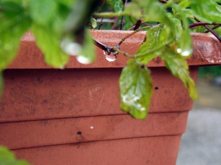 #rain