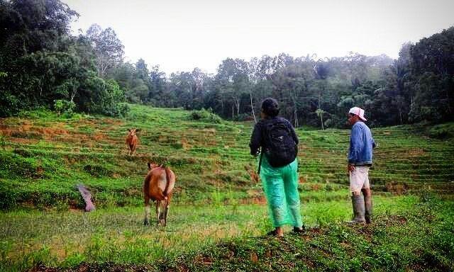 Green view at Rinding Kila'.