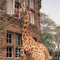 ケニアにある、キリンが訪れるホテル「ジラフマナー」