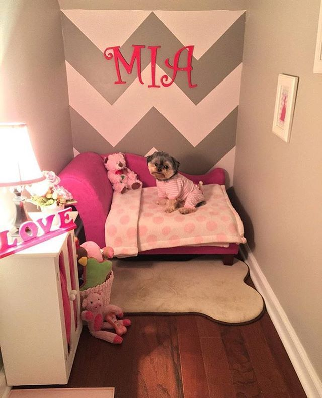Family Turns Closet Into A Bedroom For Their Dog