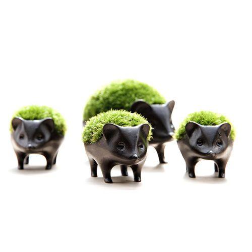 はりねずみの苔盆栽がかわいい。アラハシラガゴケという種類。ハリネズミの鉢はブロンズ製。インテリアにおすすめ。 : インテリア雑貨の伊勢海老太郎ブログ