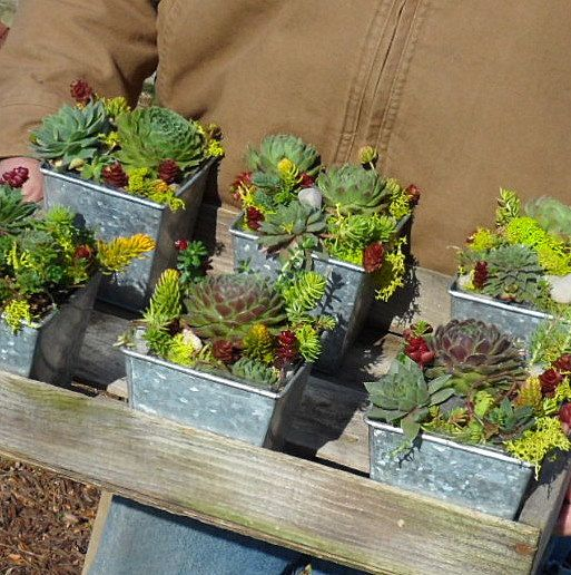 Succulent dish garden in a square tin dish garden gardens and succulent containers - Dish garden containers ...