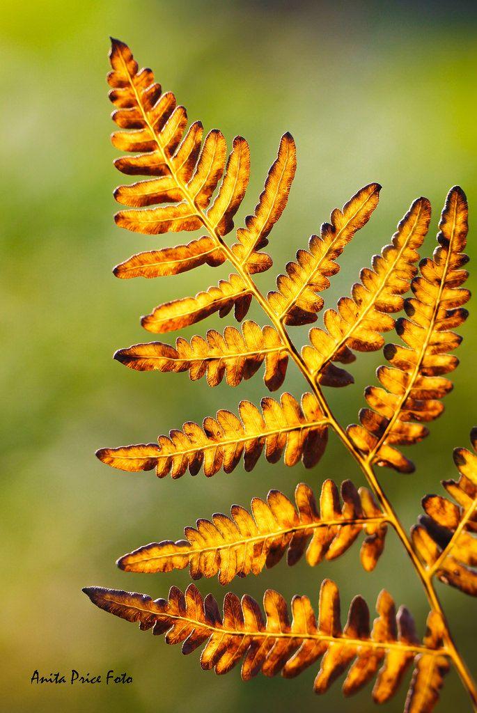 ~~Backlit fern macro   by Mrscurlyhead~~