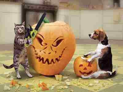 HALLOWEEN - Cat & Dog Carving Pumpkin