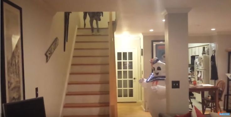 Dogs get scared sometimes, and usually over the silliest things. Sometimes it makes sense, and other times, not so much. Like the pup you are about to see in the video below. The funnyGreat Dane pup in the video is about to see a ghost and as expected he is not liking it! What a …