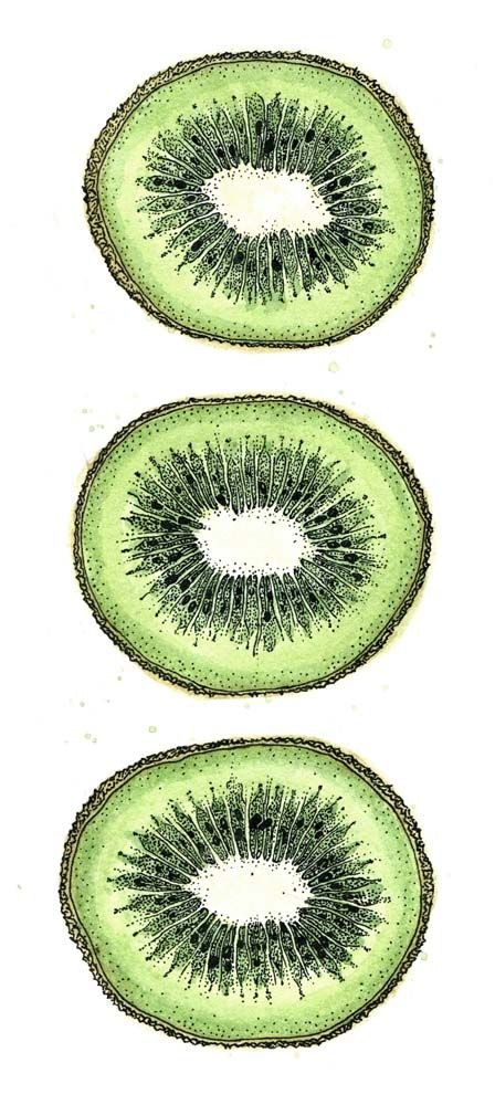 Kiwi drawing, ink and watercolour