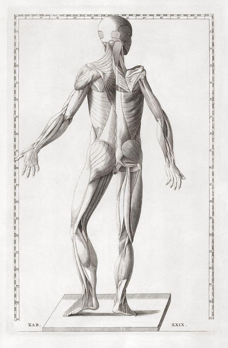 60 Best Art Of Anatomy Arte Da Anatomia Images On Pinterest