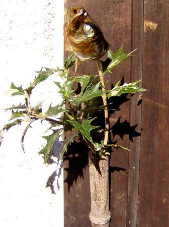 鰯の頭を落とし、身は焼いて丸ごとパクリ、別に香ばしく焼き上げた頭を柊に挿して玄関へ。門松に続いて、自家製の季節飾り第二弾「やいかがし」が完成した。