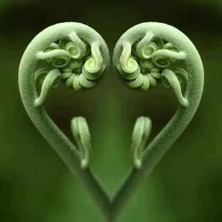 Splendid image of ferns growing with heart!