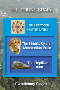 reptilian brain | The Triune Brain