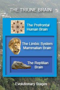 reptilian brain | The Triune Brain