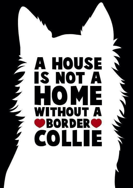 A HOUSE IS NOT A HOME WITHOUT A BORDER COLLIE!!!