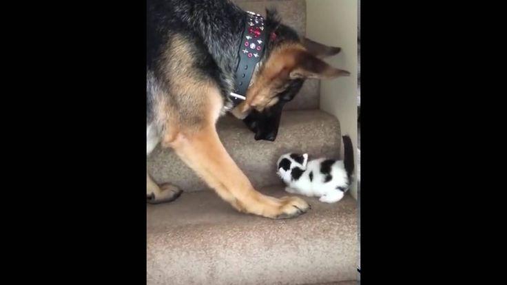 Perro ayuda a gatito a subir escaleras