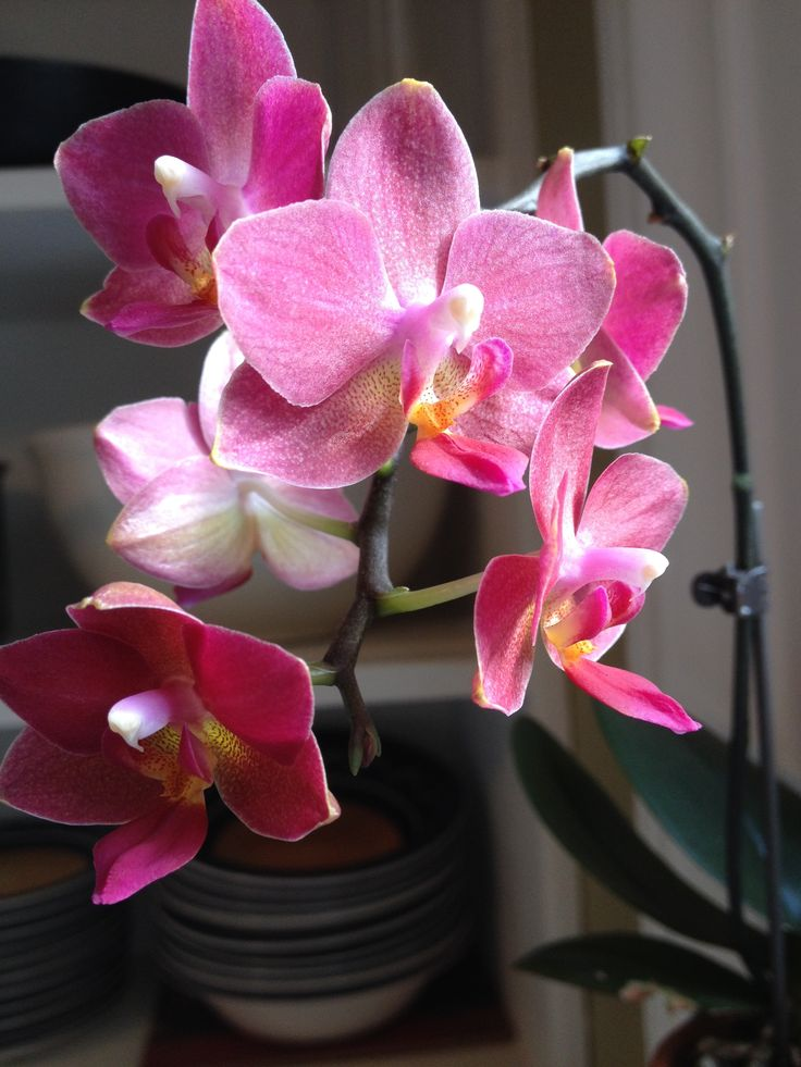 Orchid on my window sill. By Ruth Baker