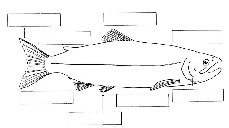 types of fish and their habitats worksheets - Google ...
