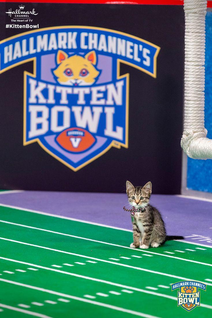 """""""Hey guys, I'm open!"""" The catletes return for Kitten Bowl"""