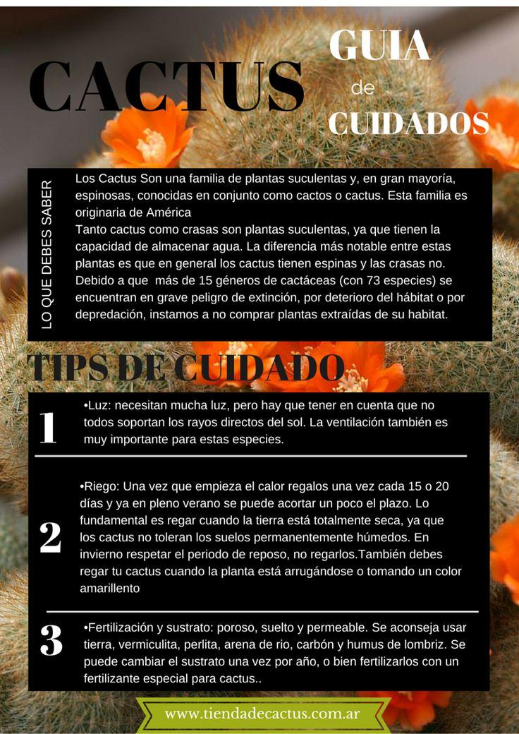 Guía de cuidados de cactus  