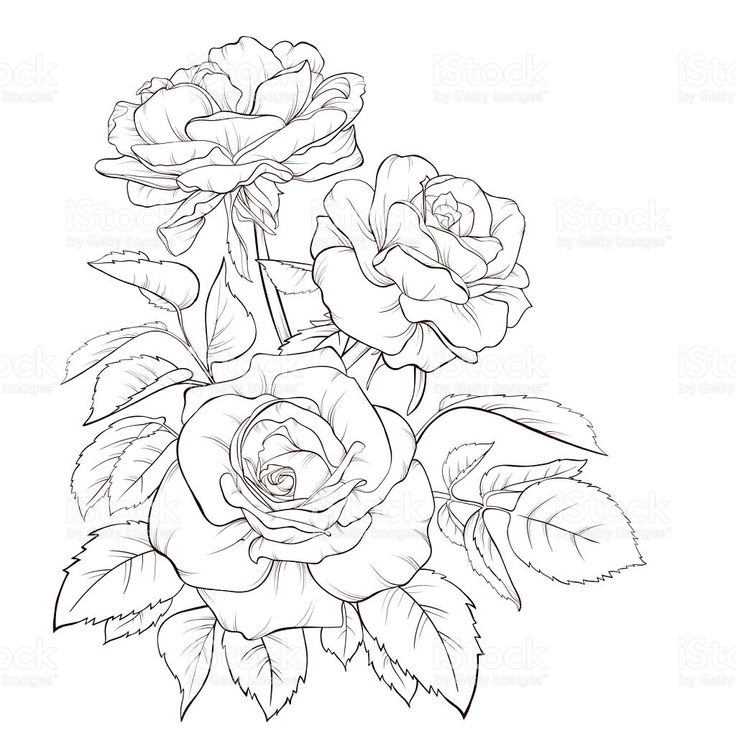 Hibiscus Tattoo Outline: 32 Best Flower Bouquet Tattoo Outlines Images On Pinterest