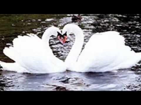 Valsa O Lago dos Cisnes  Orquestra Frank Pourcel