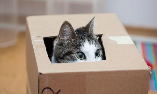 A veces una caja de cartón puede ser el mejor juguete para tu gato. Les encanta esconderse en ellas y además puedes crear divertidos juegos DIY.