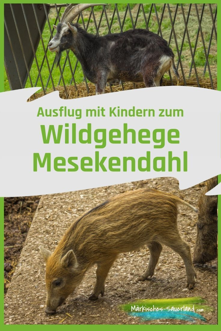 Ein Besuch Im Wildgehege Medekendahl Lohnt Sich Fur Die Ganze Familie Umgeben Von Wald Und Wies In 2020 Ausflug Sauerland Und Outdoor Abenteuer