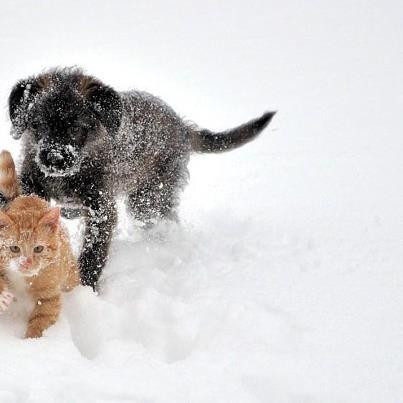 Snow, kitten and puppy